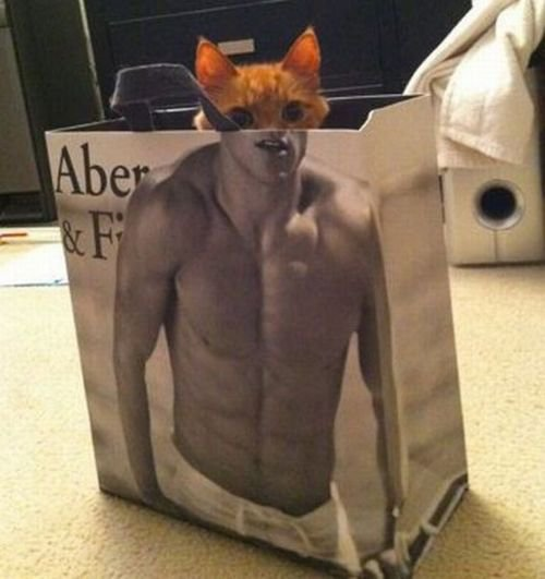 The cat's position in the bag gives us this odd image