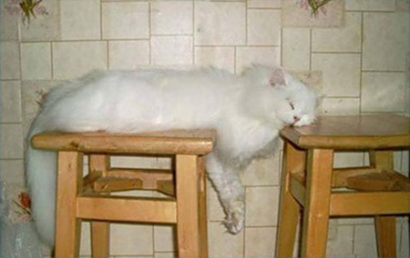 Cat sleeping across two wooden bar stools