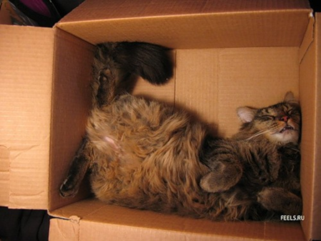 Cat sleeping curled up in box