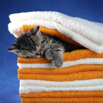 Cat sleeping in between folded towels