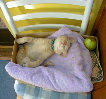Cat sleeping on a towel