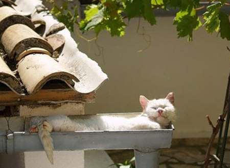 Cat sleeping in gutter