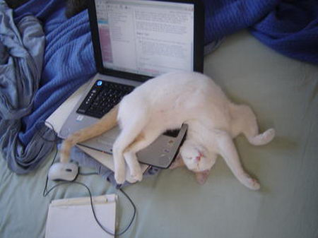 Cat sleeping on laptop keyboard