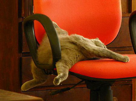 Cat sleeping sprawled on chair