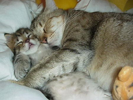 Cat sleeping with arms around a kitten