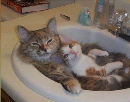 Mother and kitten sleeping in bathroom sink