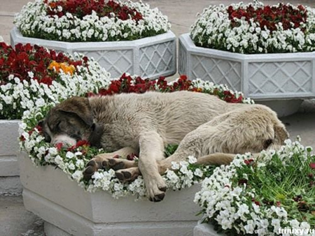 Dog sleeping in flowers