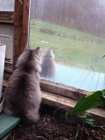 Cat staring out the window at an identical cat