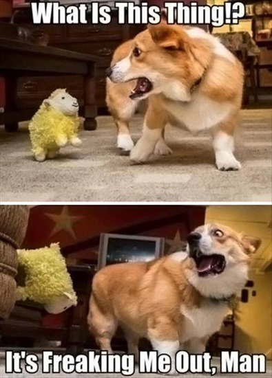 Get this thing away from me!