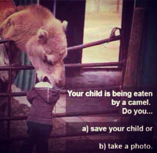 Your child is being eaten by a camel–what do you do?