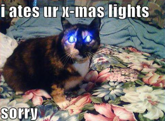 Sorry, I ate your christmas lights