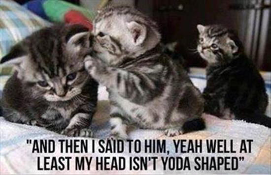 Yeah, well at least my head isn't yoda-shaped