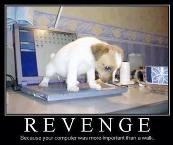 Revenge! Because your computer was more important than a walk