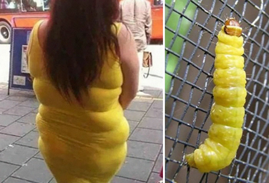Lady's fat rolls look like a yellow caterpillar