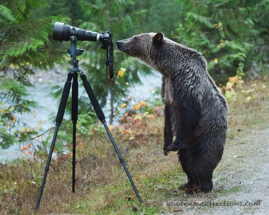 Bear looking through telescope in woods