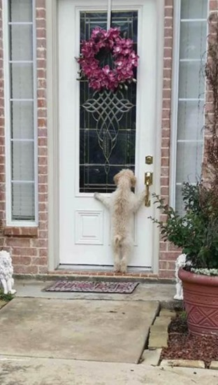 This dog ran away from home. The owner looked for him for hours and came home to find this.