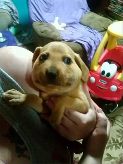 And this is what a dog looks like after accidentally swallowing a bee