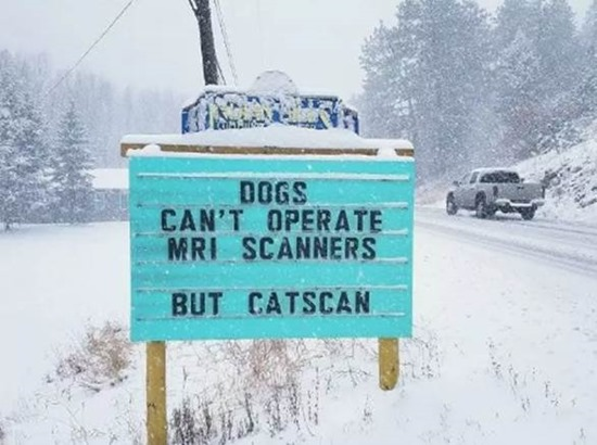 Dogs can't operate MRI scanners but catscan